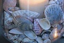 seashell deco