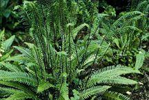 Plants of the Northwest