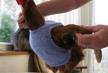 knitting for hens, etc