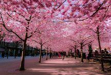 nlc.hu > Spring