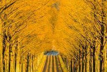 Yellow: Photography