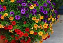 Jardinagem que adoro