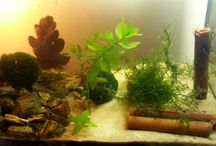 Krewetki - Shrimps / Moje krewetkarium - My shrimps