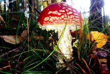 Grzyby - Fungi Juss. - R. T. Moore / Grzyby w Polsce