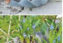 Have krukker i cement