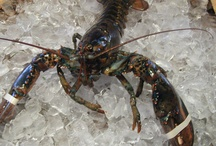 Fresh Seafood Items - The Fresh Lobster Company / Fresh Seafood Products from the New England area available at The Fresh Lobster Company, LLC of Gloucester, Massachusetts (home of the perfect storm)