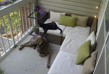 balkon z kotami