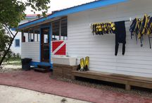Belize Padi Dive Shop - Hatchet Caye Resort / The New PADI certified Dive Shop at Hatchet Caye Private Island Resort Belize. Our Dive Masters are ready to teach and explore with you. Visit our Dive page to see all our diving sites! http://hatchetcaye.com/belize-scuba-diving/