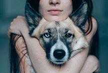 Photoshoot dogs