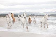 mural de parede com cavalos