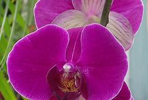 Orchidea passion ;)