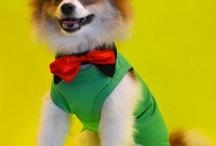 Animal Fashion