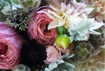 Feminine Florals / by Lorri Mayes