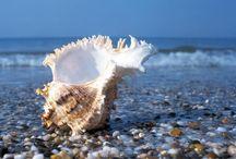 ракушки / фото морских ракушек, даров природы.