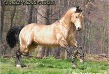 paint horses and quarter horses
