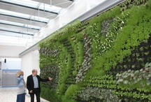Living walls / Commercial spaces