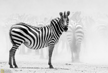 Black+White Style / Black+white and black and white style of every stripe. And dot. And...