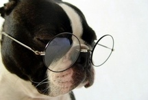 Boston Terrier Eye Wear