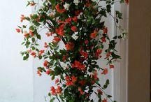 Aishwarya plants Creation