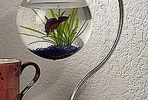 Critters in Tanks / Aquariums and other such critters