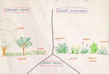 Forest Garden Ideas
