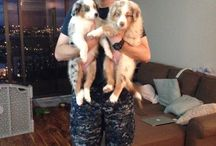 Soldiers & Their Dogs / Our service men and women and the loyal canines who love them.