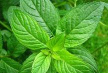 Aceites Esenciales / Aceites esenciales Grado Terapeutico 100% naturales, puros y organicos para mejorar la salud fisica y emocional.