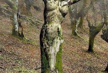 natuur (bomen)