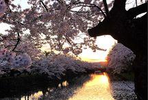入賞作品:『桜』フォトコンテスト / http://greensnap.jp/contest/98