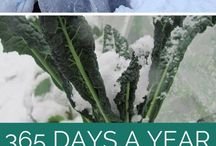 HOW TO GROW FOOD 365  DAYS OF THE YEAR