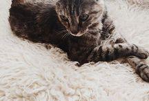 flokati Pets / pets love flokati rugs