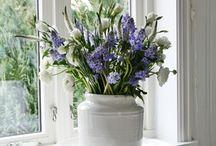 bloemen / bollen