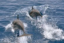 Dolphins / Dolphins should not be kept in captivity, neither should they end up on the dining table.