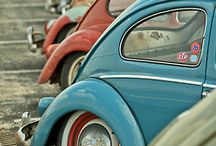 beetle crazy