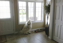 Staging Pets / Furry friends we've encountered while staging