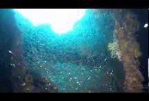 Videos of wrecks