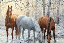 Horses - Donkey - Mules.