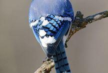 bird mood board