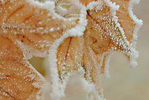 Winter / Rijp