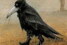 Crows, Ravens, Rooks & Jackdaws