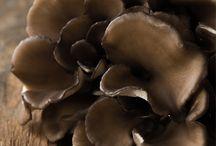 Couleur café et chocolat... / Toutes les nuances de marron....