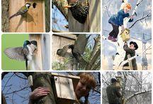 Набор конструктор для изготовления Скворечника / Скоро весна!!! Возвращаются перелетные птицы. Обеспечим птичек своим домиком. Установи скворечник на даче и скворцы помогут защитить Ваш сад от вредителей. Закрепите скворечник во дворе на дереве, доставь радость детям, которые  наблюдая за поведением птиц станут немножечко добрее. http://zacaz.ru/products/unikalnye-tovary/nabor-skvorechnik/