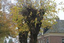 Gem. Aa en Hunze (dr) / Toerisme & recreatie. Meer info op de site van Revital - Uit in Nederland.  www.revital.nl