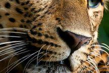 Animal love♥