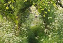 ambient zahrady