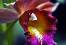 Florals / natural beauties / by Melinda Leung