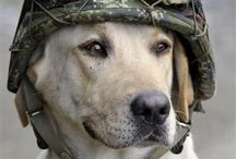Army dog / He's brave
