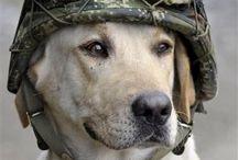 Dogs are men best friends