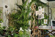 кiмнатнi рослини