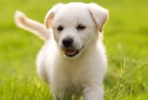 Puppy Training Tips / Learn how to train your puppy.
